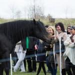 Žirgų šou vestuvėms
